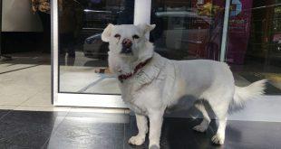 Dog Spent Days Outside Turkish Hospital Waiting for Owner