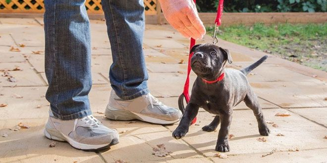 How To Train Your Dog In The Right Way