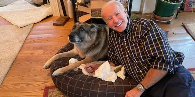 Joe Biden's Pet Pooch Major 'Indogurated' as First US Dog-elect ahead of Presidential Inauguration
