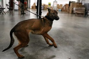 Miami Heat to Use COVID-19 Sniffing Dogs to Screen Fans at Games