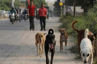 Six Dogs Found Poisoned on Banks of Pavana in Pune