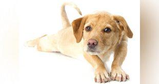 Stretching Your Senior Dog