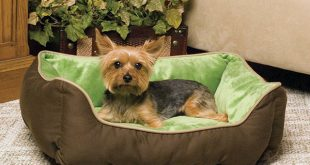 Tips That'll Help You Keep Your Couch Pup Free