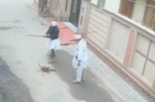 Two Arrested for Killing Stray Dog, Incident Caught on Camera