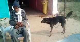 Upset with Sons' Behaviour, Farmer Wills Half of his Property to Dog