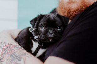 5 Cool Reasons you should Adopt a Pet