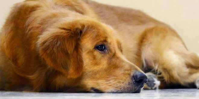 Annoyed over Continuous Barking, Man Shoots Neighbor's Dog Dead in Karnataka