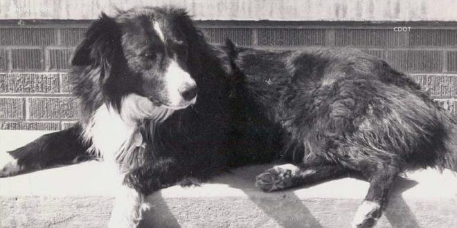 Broomfield Names Pedestrian Bridge after Beloved Dog