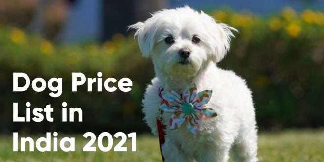 Dog Price List in India 2021 - Budget Friendly Dog