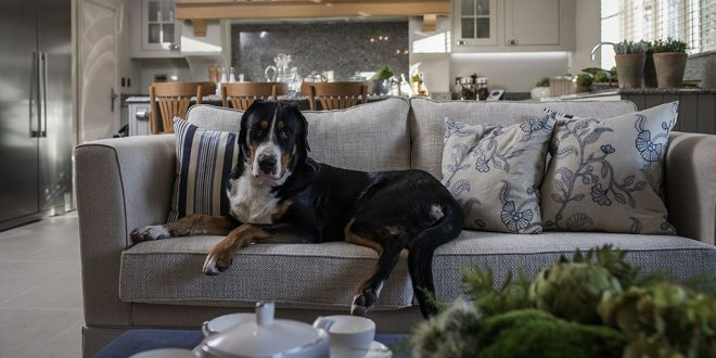 Features of Interior Design for Dog's Owners
