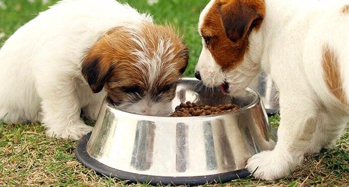 Feed them Healthy Food