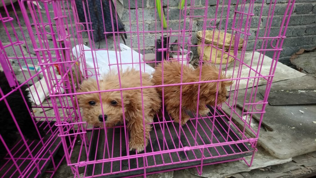 Fight against Cruel Breeding