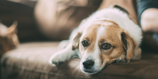 How To Help Your Dog Stop Crying When Left Alone