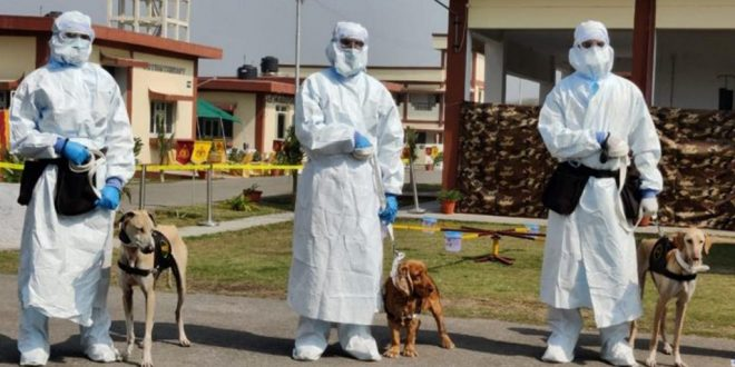 Indian Army Trains Chippiparai Dog Breed To Detect Covid-19 Infections In Real-Time