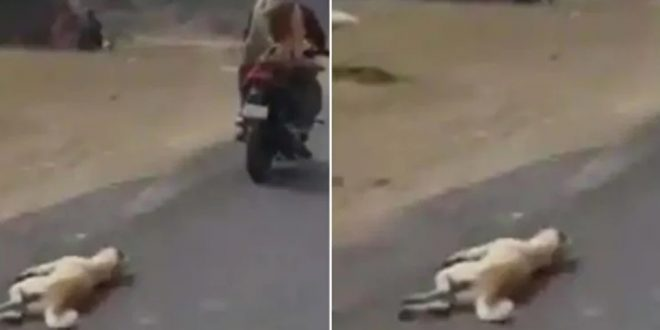 Man Arrested for Dragging Carcass of Dog using Bike