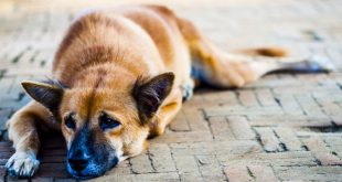 Residents, Activists Cry Foul Over killing of Stray Dogs