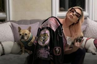Singer Lady Gaga's Dog Walker Shot, 2 of her French Bulldogs Stolen in LA