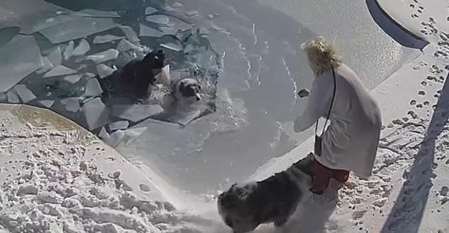 US Man Jumps into Freezing Pool Water to Rescue Pet Dog who Fell In