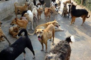 Feeding Street Dogs not a Crime