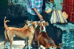 53-Year-Old Man Thrashed for Sheltering, Feeding Stray Dogs