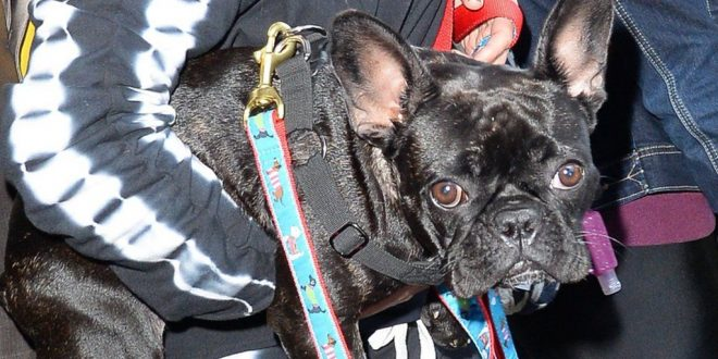 'A Very Close Call' Lady Gaga's Dog-Walker tells of Ordeal