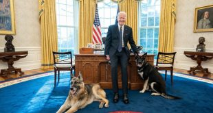Biden Dog Major in Doghouse After Injuring Security Agent