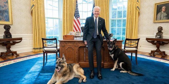 Biden Dog Major in Doghouse After Injuring Security Agent