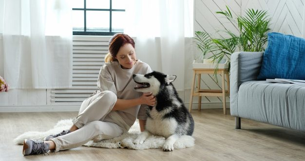 Dog Health Insurance Cost in India