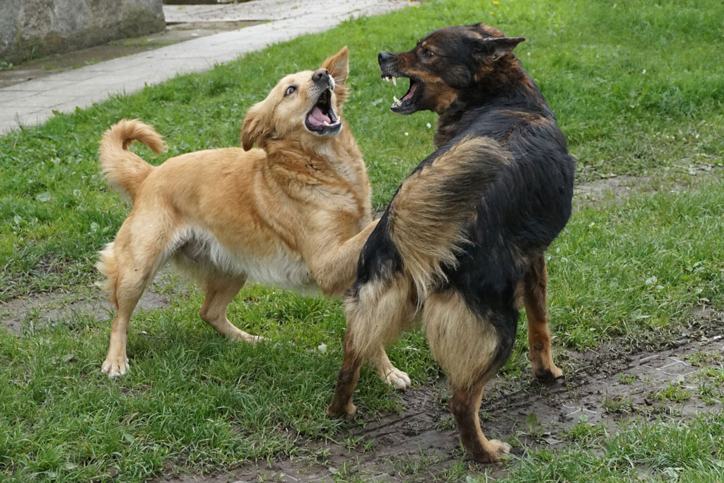 Fighting With Other Dogs