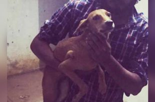Man Throws Stray Dog off Terrace