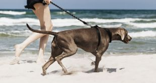 Best Dog Vacation Destinations in the U.S.