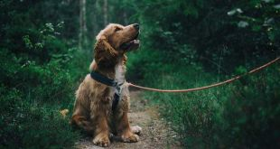 Vote for Jacksonville's best dog park