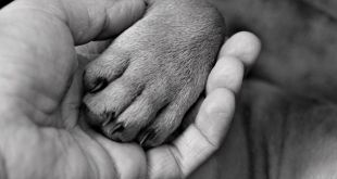 7 Tips For Teaching Your Dog To Accept Nail Trims