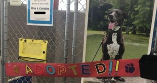 """""""Mica"""", dog who has been in Ohio animal shelter for almost 7 years, finally adopted"""