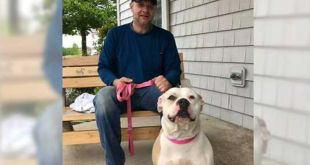 Dog missing for over a year reunited with original owner in Brown County