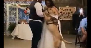 Pawdorable! Dog dances with bride and groom in viral video - WATCH