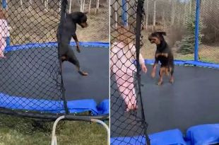 This Video Of A Toddler And Dog On A Trampoline Is The Best Thing You'll See Today