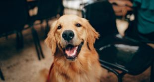 Tips For Caring For Your Dog from Puppy to Adulthood