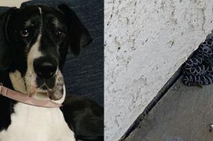 'Hero' dog saves owner from rattlesnake bite in Oceanside backyard
