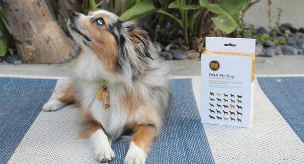 DNA My Dog via StackCommerce