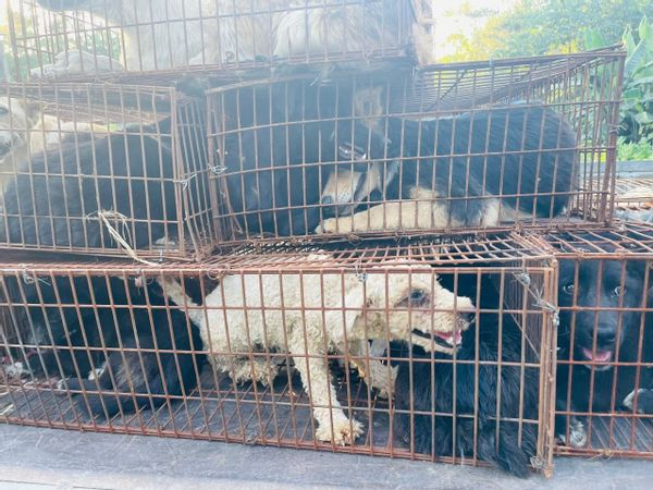 68 dogs rescued by the activists from a truck bound for China's annual dog meat festival