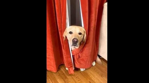 Dog scared of vacuum cleaner warns netizens about 'monster' in adorable video