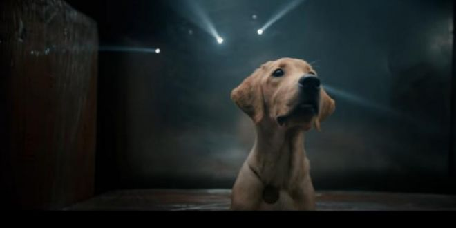 Watch: '777 Charlie' teaser shows the journey of an adorable dog