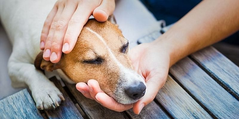Indie dogs: 5 reasons why you'll love them