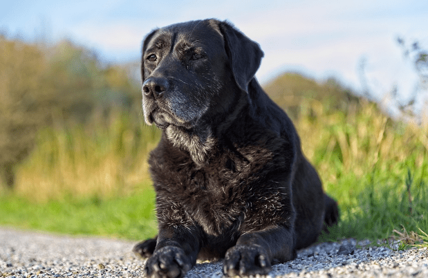 Packing up the pounds on your senior dog