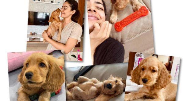 Rashmika Mandanna writes heartfelt post about her pet dog Aura: 'I found my bundle of joy'