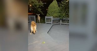 Westlake woman issues warning after dog attacked by deer in her yard