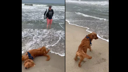 Watch this dog's hilarious reaction at beach that went viral