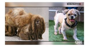 Stray dog is unrecognizable after 6 pounds of hair is removed
