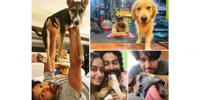 Fathers Day 2021: Meet the dog daddies of Bollywood